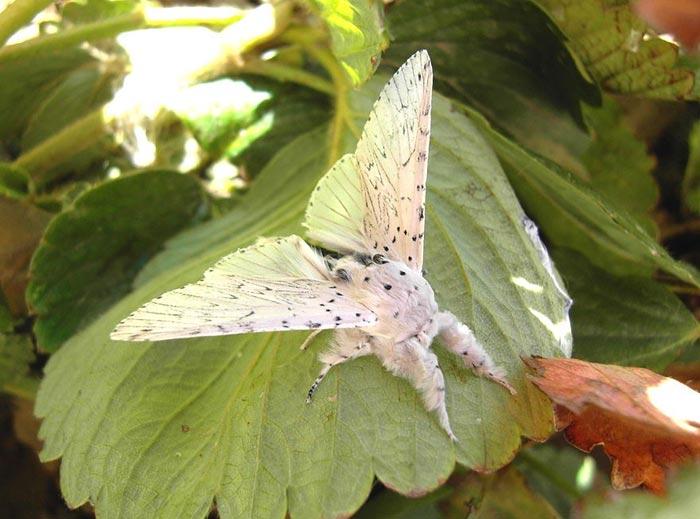 عکس هایی زیبا از دنیای حیرت انگیز پروانه ها
