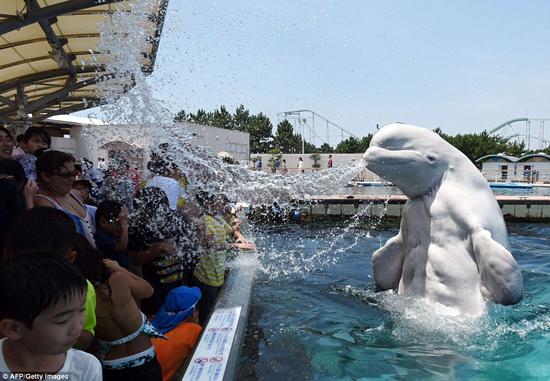 نهنگ بامزه که مثل یک آب پاش است + تصاویر