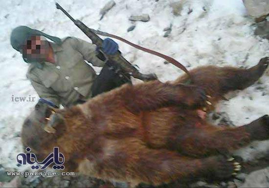 شکار خرس قهوه ای کمیاب در کلاردشت !+ تصاویر