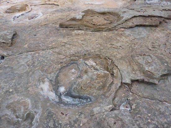 ردپای دایناسورها در استرالیا + تصاویر
