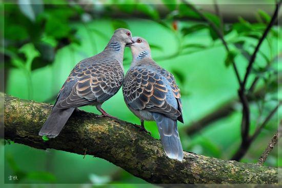 تصاویر دیدنی از پرندگان عاشق و خوشبخت