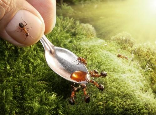 عکس های جالب و دیدنی از دنیای مورچه ها
