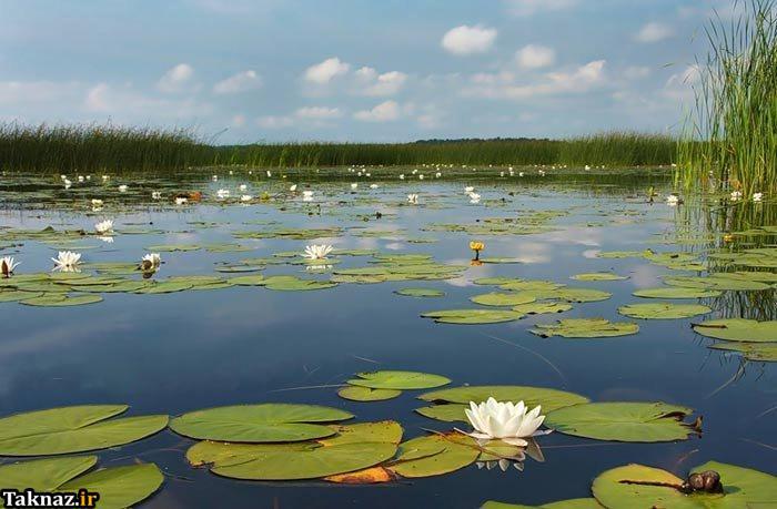 عکس هایی از بهشت روی زمین برای آرامش روح !