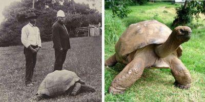 پیرترین لاک پشت جهان (عکس)