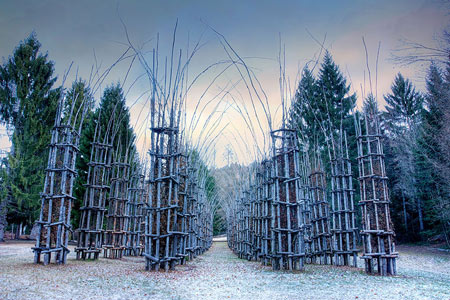 تصاویر و معرفی کلیسای درختی زیبا