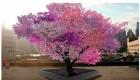 درخت عجیبی که 40 نوع میوه میدهد (عکس)