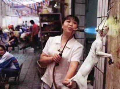 گوشت گربه در رستوران های ویتنام