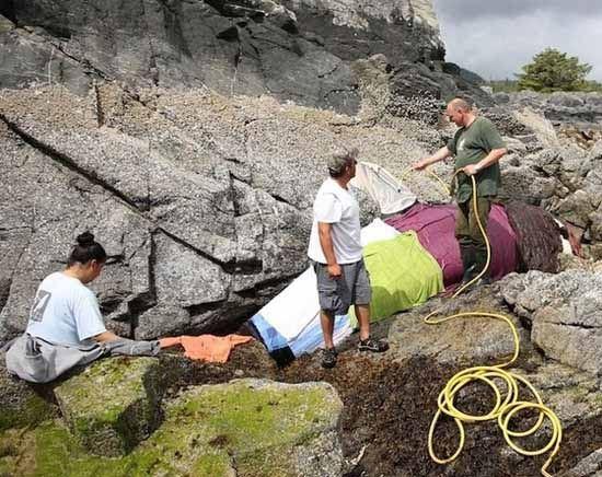 تصاویر دیدنی از نجات نهنگ گیرکرده در میان صخره ها
