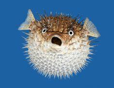 پیدا کردن یک نوع ماهی بسیار ترسناک و عجیب + تصاویر