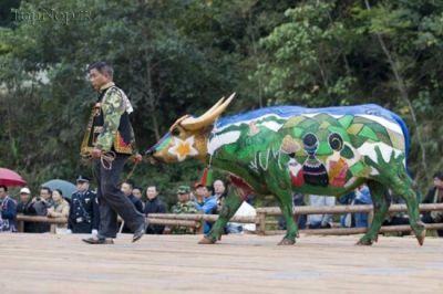 جشنواره جالب رنگ آمیزی بوفالوها