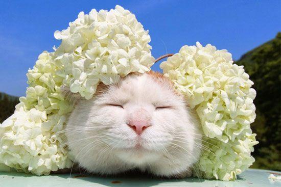 عکس های دیدنی و بامزه از گربه های خندان