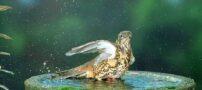 عکس های دیدنی از پرندگان زیبا