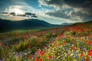 طبیعت زیبا و رویایی برای گذراندن وقت در تابستان