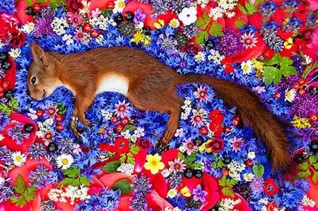 تصاویری از حیوانات مرده روی گل های زیبا