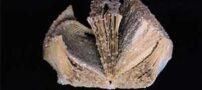 عکس های جالب از کتاب های کریستالی