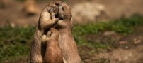 تصاویری از حیوانات ناز و خوشگل (طنز)