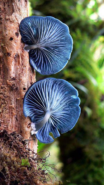 قارچ های عجیب و زیبا