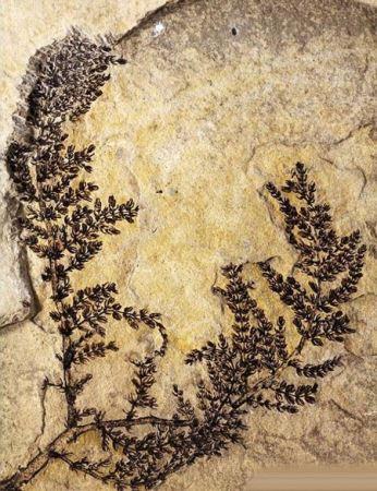 کشف قدیمی ترین گل مربوط به دوران ژوراسیک (عکس)