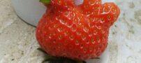 عکس های دیدنی از عجیب و غریب ترین میوه ها