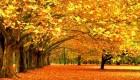 تنومندترین درختان جهان (+عکس)