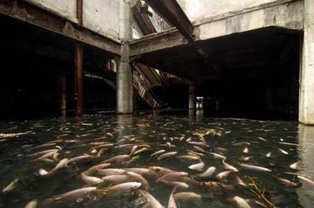 تصرف خانه ای متروکه توسط ماهی ها در بانکوک