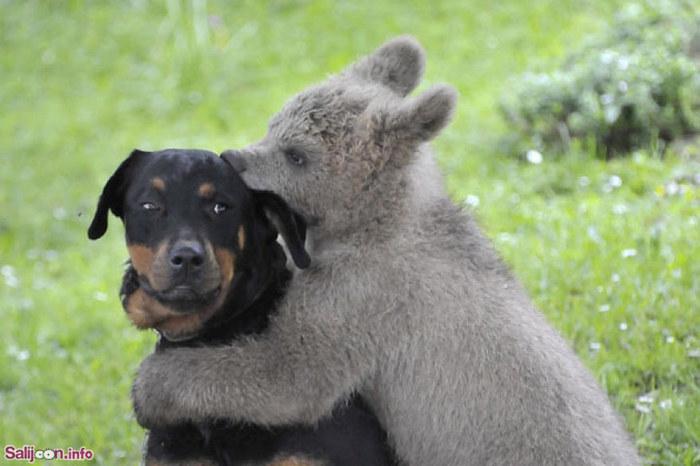 عکس های زیبا از دوستی و رفاقت در حیات وحش