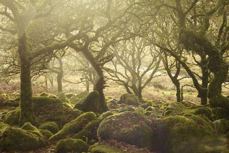 جنگل خارق العاده ویستمن در انگلیس + تصاویر