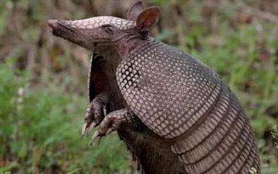 معرفی عجیب ترین موجودات جهان (عکس)