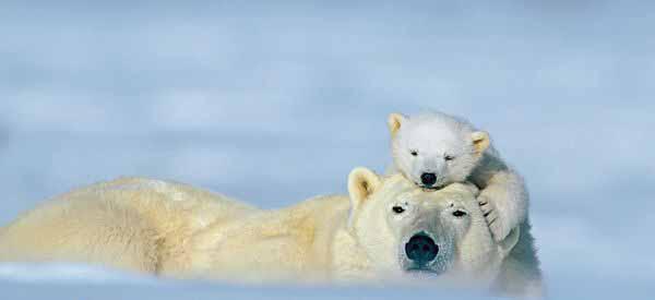 تصاویری رمانتیک از حیوانات عاشق
