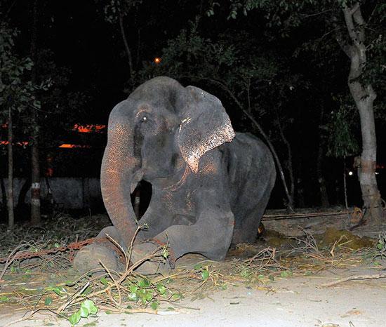 این فیل پس از آزادی اشک ریخت (عکس)