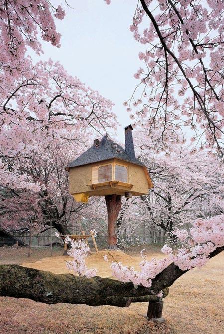 جالب ترین خانه درختی های جهان (عکس)