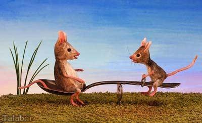 عکس های جالب و زیبا از زندگی موش ها
