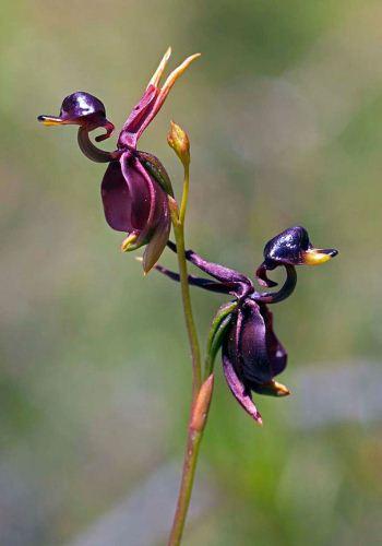 عکس های دیدنی از عجیب و غریب ترین گل ها