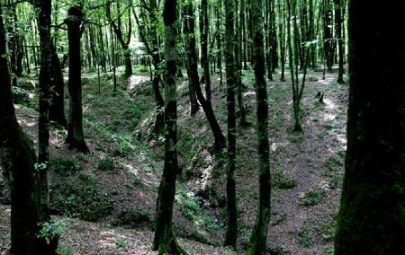 معرفی پارک جنگلی امام رضا (ع)
