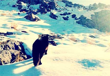 این گربه سیاه یک صخره نورد است + تصاویر