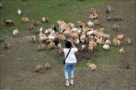 عکس های دیدنی از جزیره خرگوش های بانمک