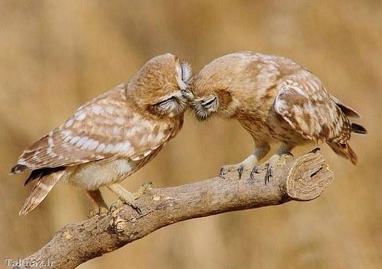 زیباترین عشق های دنیا + تصاویر