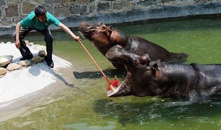 اسب آبی پاکیزه که عاشق مسواک زدن است + عکس