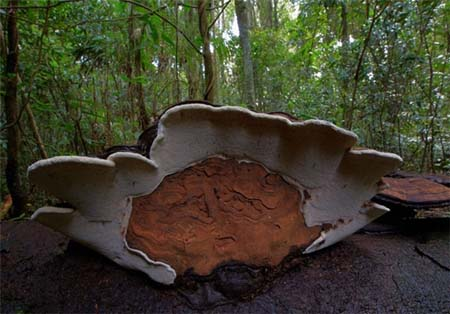 تصاویری از گونه های مختلف قارچ در جهان