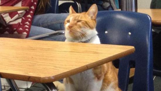 گربه ای که در آمریکا دانشجو شد (+عکس)