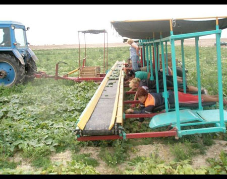 ایده جالب برای درو محصولات کشاورزی + تصاویر
