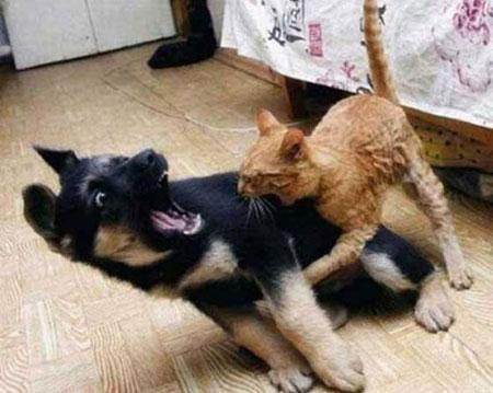 عکس های جدید و خنده دار از حیوانات بامزه