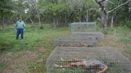 تصاویر وحشتناک و دیدنی مزرعه مردگان در آمریکا