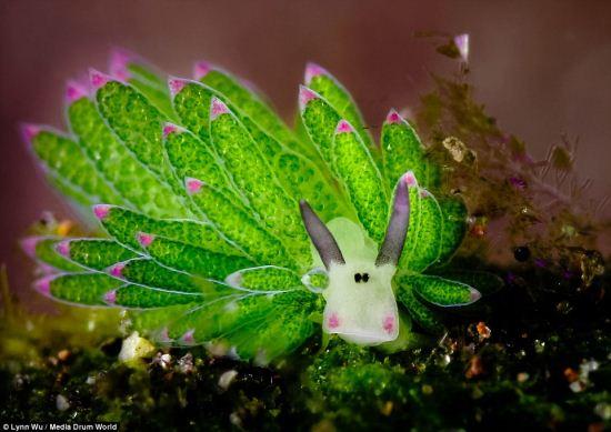 کشف یک موجود بامزه و زیبا در سواحل بالی
