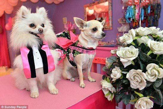 ازدواج جنجالی 2 سگ با یکدیگر (عکس)