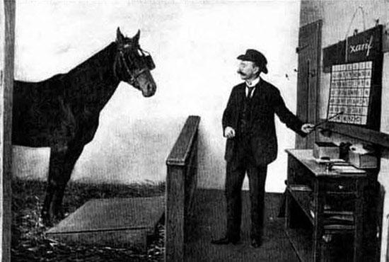 باهوش ترین اسب آلمانی در برلین + عکس