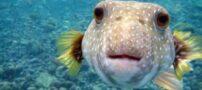 کشف یک ماهی عجیب و ترسناک در مکزیک (عکس)
