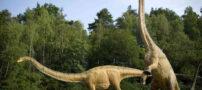 کشف ردپای دایناسوری مربوط به 65 میلیون سال پیش + عکس