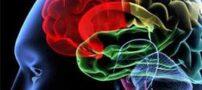 کوچک شدن مغز انسان از گذشته تا حال