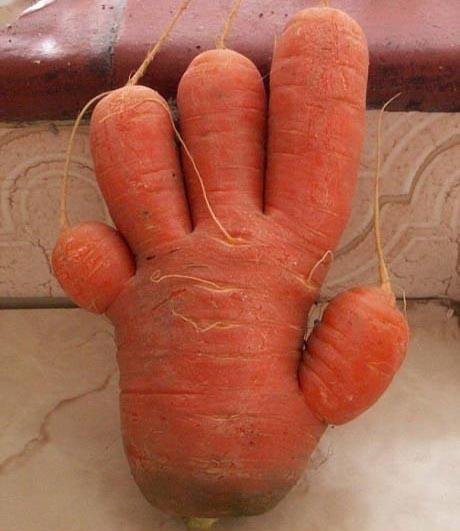 تصاویری دیدنی از هنرنمایی روی سبزیجات و میوه جات